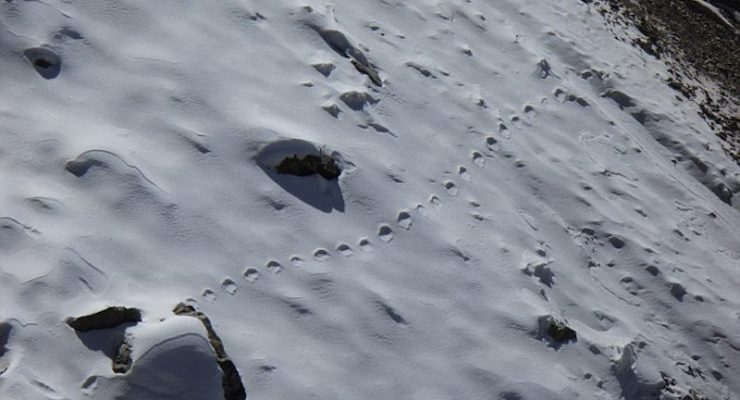 Footprints leading across a snowy mountain side