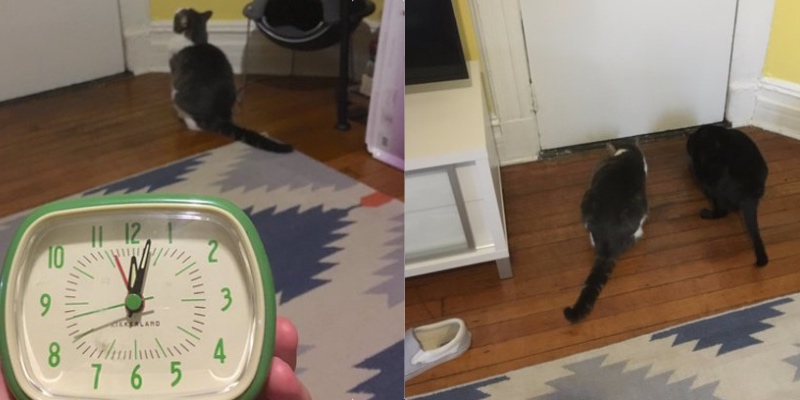 Adam Ellis and his cats think they are being haunted. Two pics showing the cats near a door seemingly at midnight