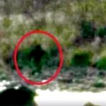 Bigfoot sighting photo