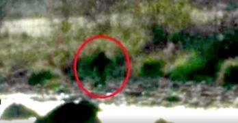 Bigfoot reported stealing pigs in California near Avocado Lake