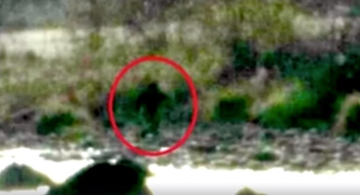 Bigfoot reported stealing pigs in California near Avocado Lake