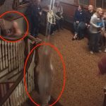 Stairwell at the Stanley Hotel with a group and two ghostly figures circled