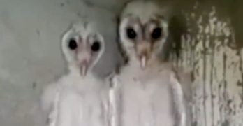 Indian builder's video of owls mistaken for aliens by web viewers
