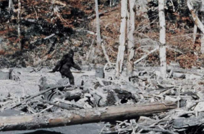 Arguably the most famous bigfoot image ever captured- the Patterson- Gimlin film- shows Bigfoot walking upright, in a hunched-over position.