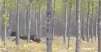 Does this video show a massive dire wolf?